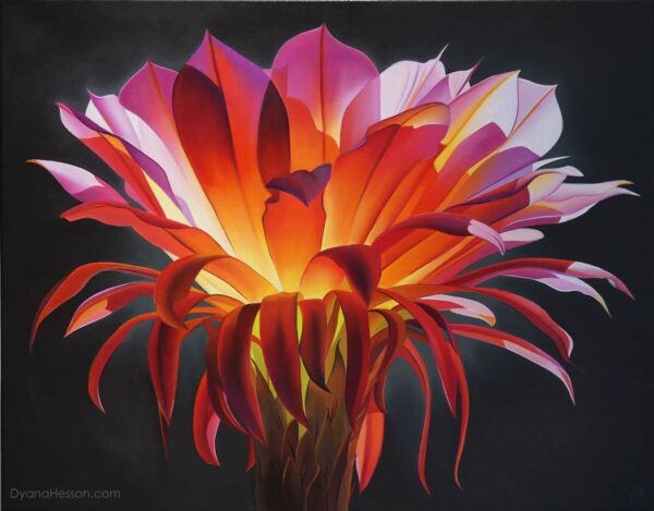 Amber Light, Echinopsis Bloom 22x28 oil on canvas