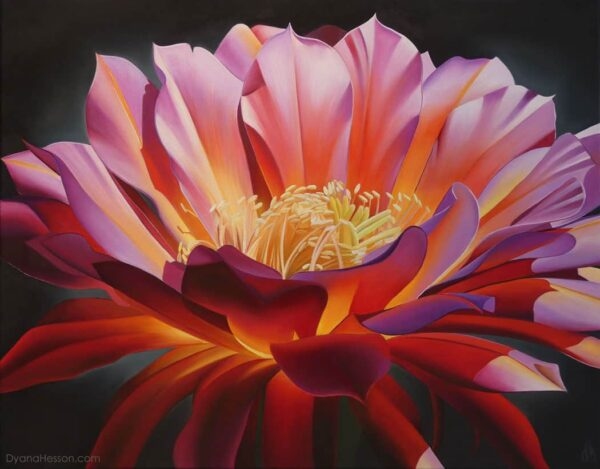 Echinopsis Bloom, oil on canvas painting