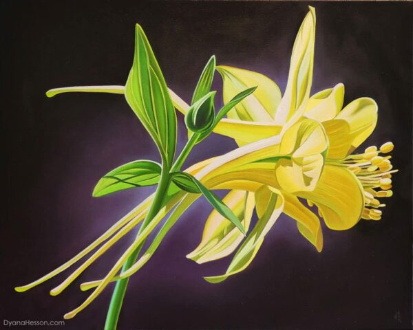 Golden Columbine, Dyana Hesson