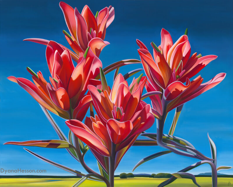 Dyana Hesson Senaca Sky Indian paintbrush